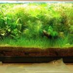 Prima foto al 60cm, stabulario per piante